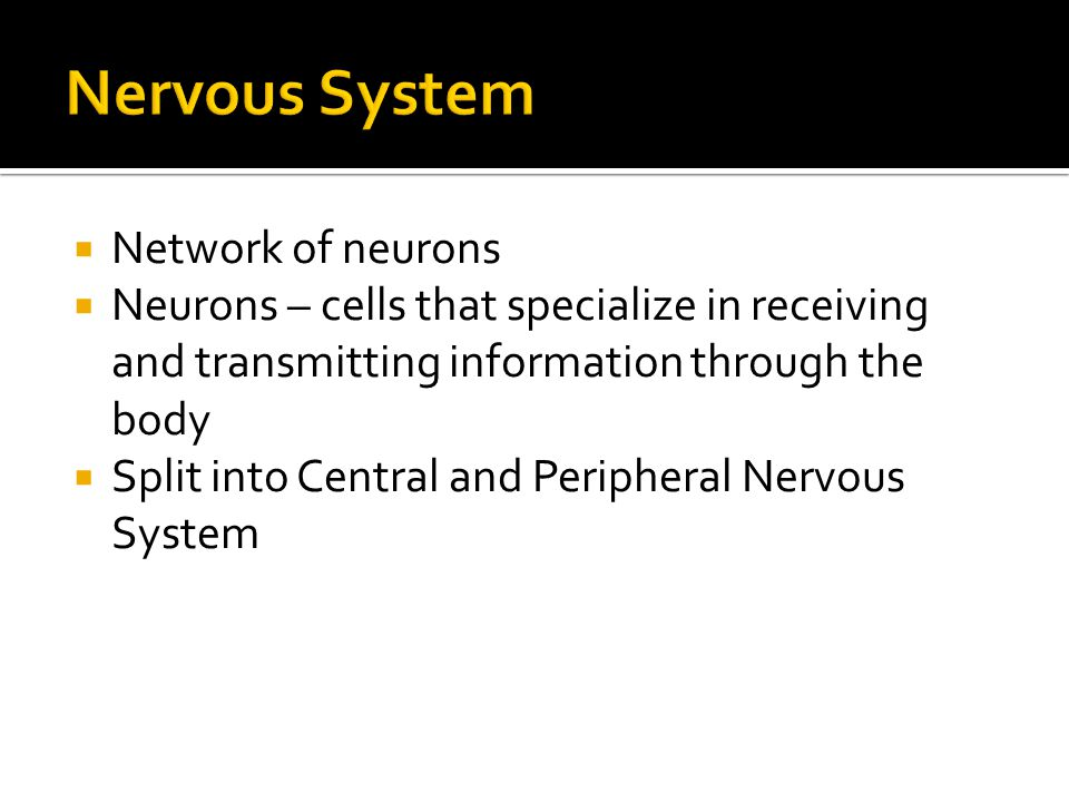  Network of neurons  Neurons – cells that specialize in receiving and transmitting information through the body  Split into Central and Peripheral Nervous System