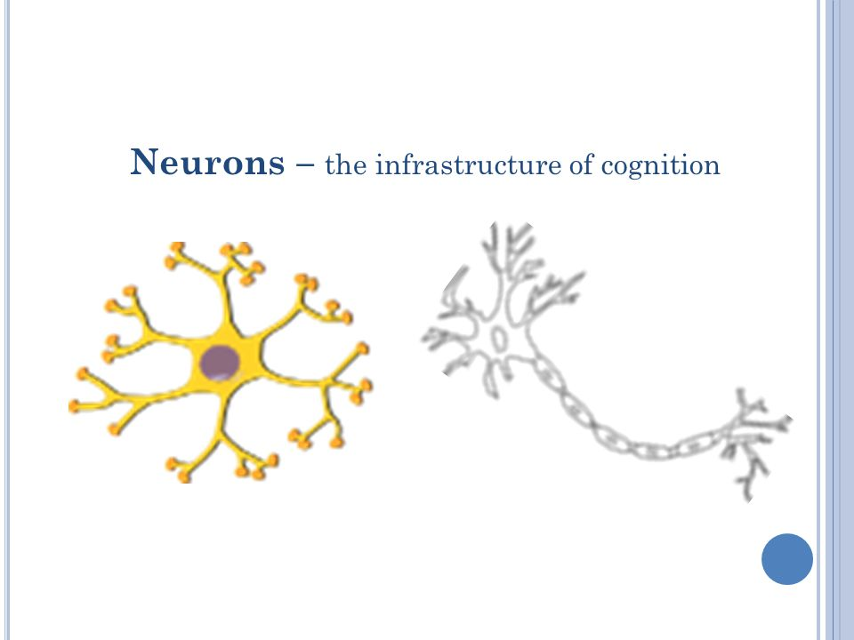 Neurons – the infrastructure of cognition