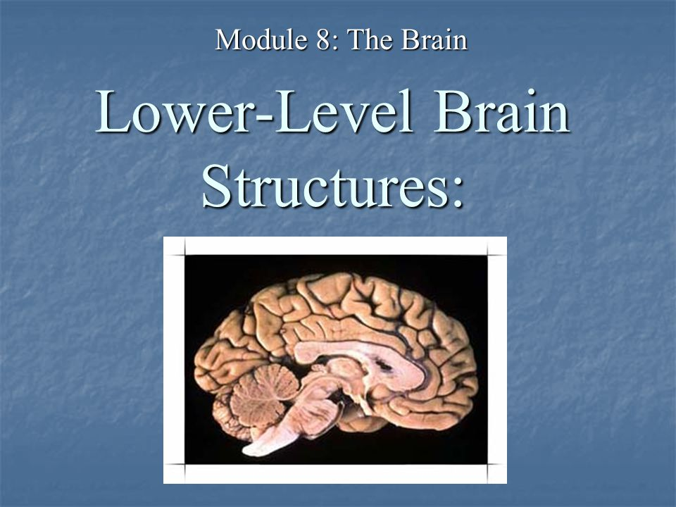 Lower-Level Brain Structures: Module 8: The Brain