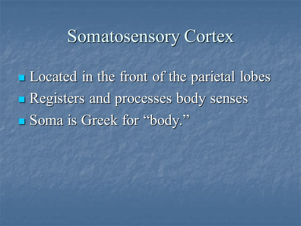 Somatosensory Cortex Located in the front of the parietal lobes Located in the front of the parietal lobes Registers and processes body senses Registers and processes body senses Soma is Greek for body. Soma is Greek for body.