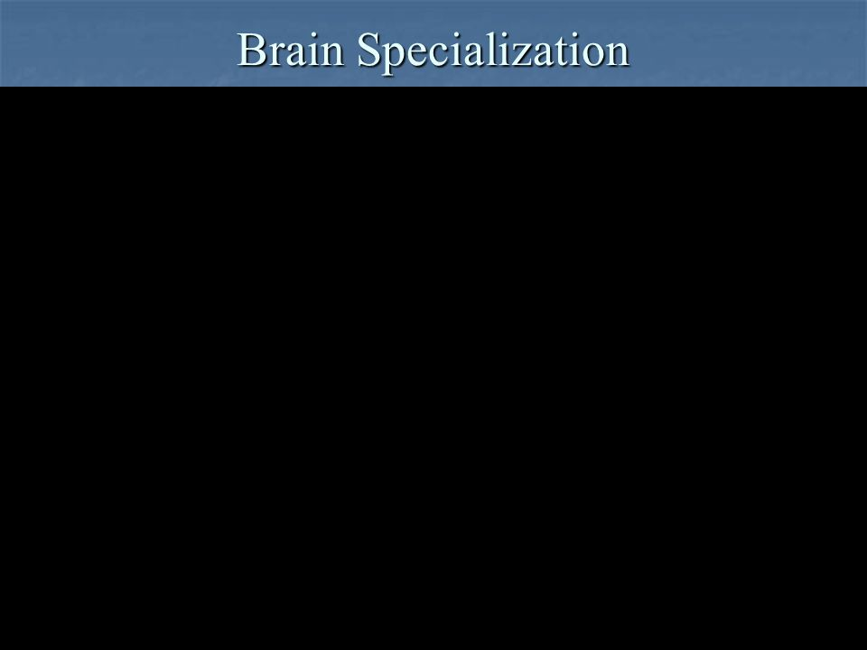 Brain Specialization