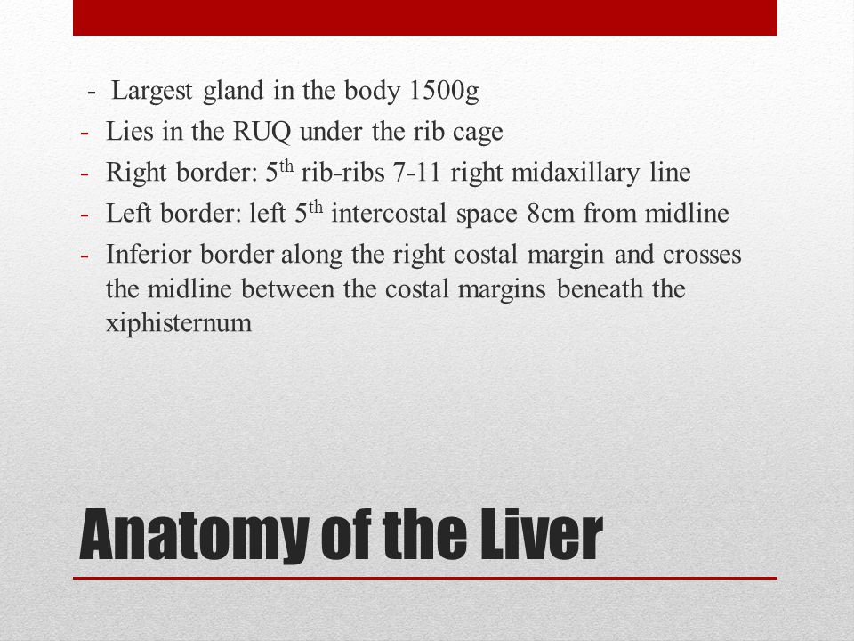 Portal triad -Hepatic artery, portal vein, hepatic (biliary) duct -Enters the liver at the edge of lesser omentum and into the porta hepatis -Hepatic artery is anteromedial, hepatic duct is anterlateral, portal vein is posterior -Pringle maneovre