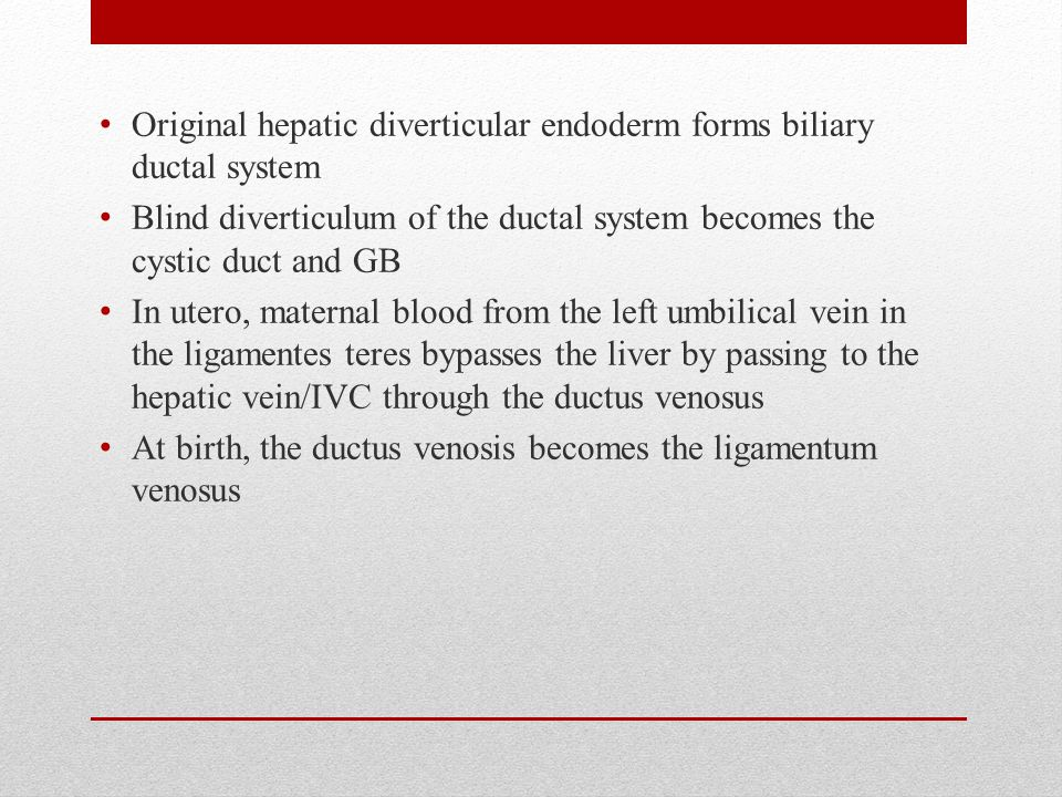 Original hepatic diverticular endoderm forms biliary ductal system Blind diverticulum of the ductal system becomes the cystic duct and GB In utero, maternal blood from the left umbilical vein in the ligamentes teres bypasses the liver by passing to the hepatic vein/IVC through the ductus venosus At birth, the ductus venosis becomes the ligamentum venosus