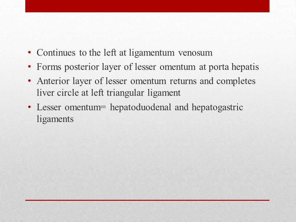 Continues to the left at ligamentum venosum Forms posterior layer of lesser omentum at porta hepatis Anterior layer of lesser omentum returns and completes liver circle at left triangular ligament Lesser omentum= hepatoduodenal and hepatogastric ligaments