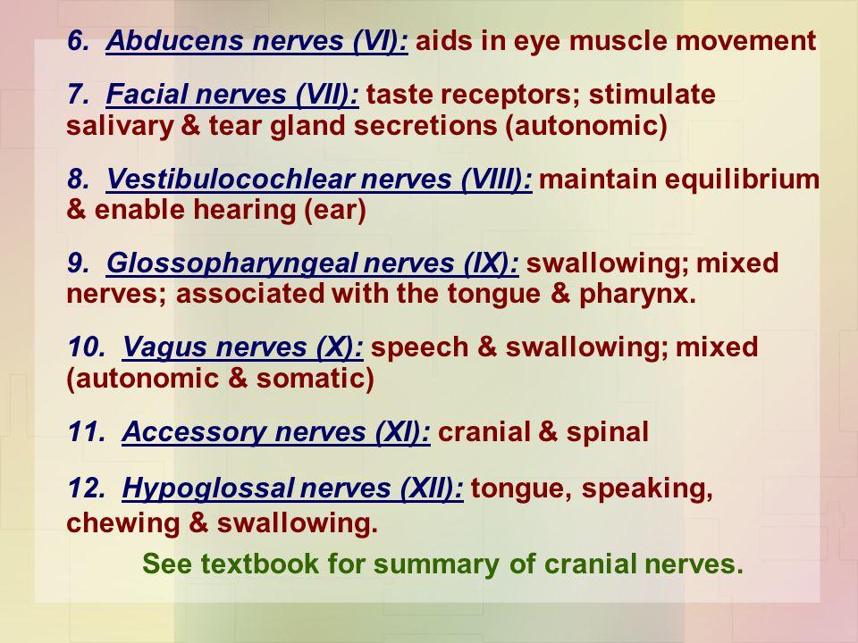 6. Abducens nerves (VI): aids in eye muscle movement 7. Facial nerves (VII): taste receptors; stimulate salivary & tear gland secretions (autonomic) 8