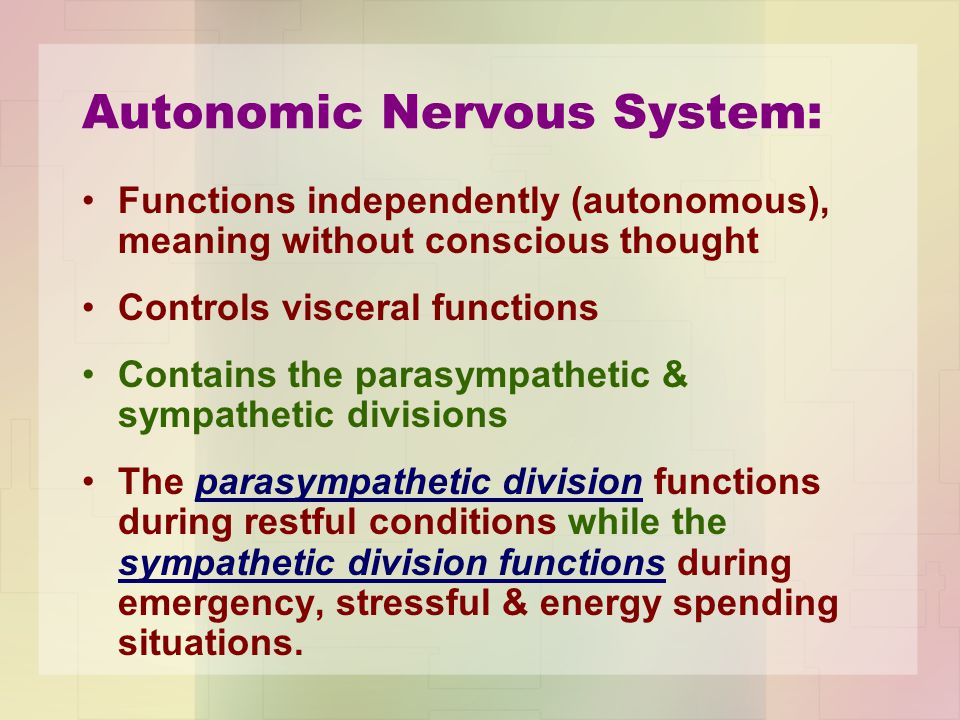 Autonomic Nervous System: Functions independently (autonomous), meaning without conscious thought Controls visceral functions Contains the parasympath