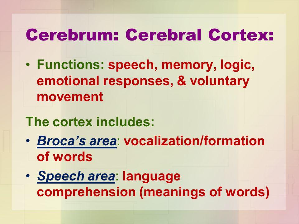 Cerebrum: Cerebral Cortex: Functions: speech, memory, logic, emotional responses, & voluntary movement The cortex includes: Broca's area: vocalization