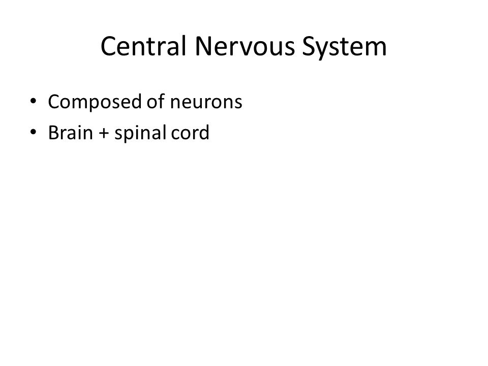 Central Nervous System Composed of neurons Brain + spinal cord