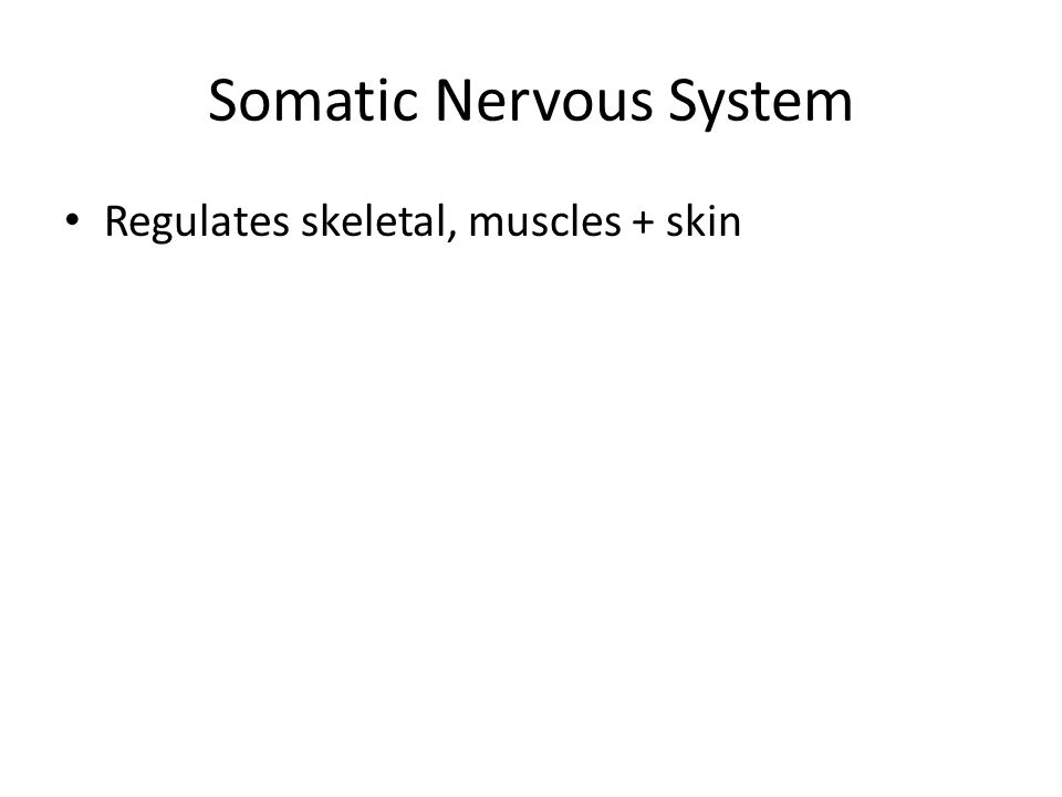 Somatic Nervous System Regulates skeletal, muscles + skin