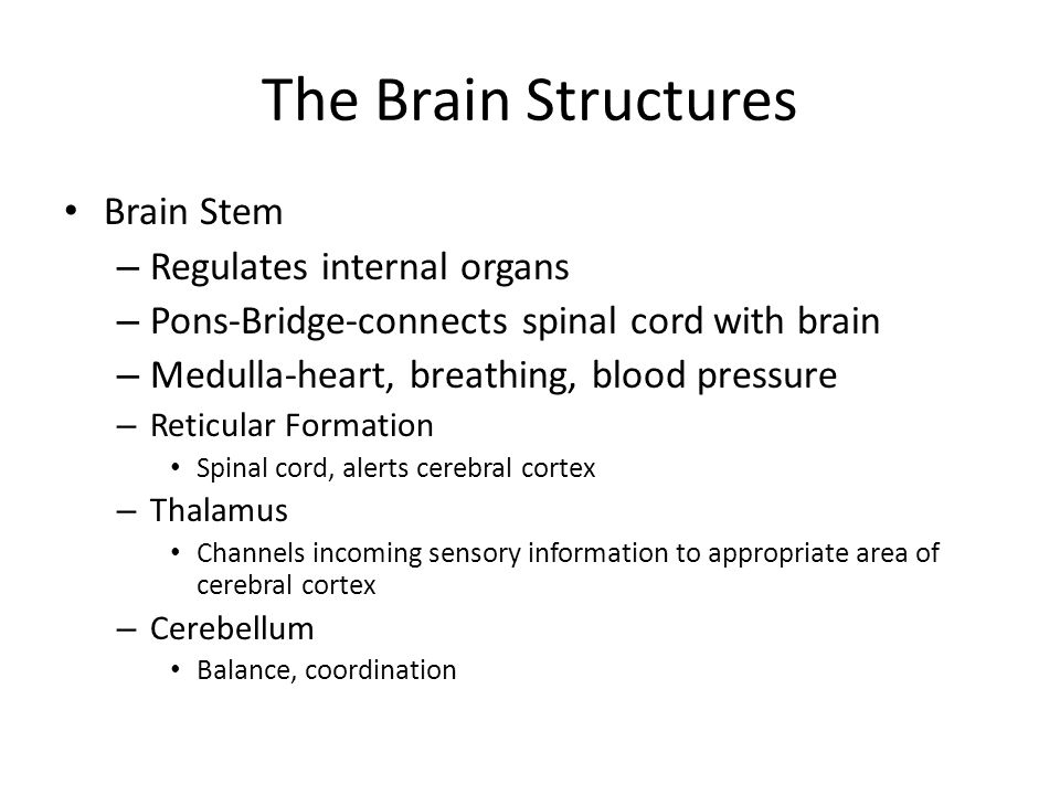 The Brain Structures Brain Stem – Regulates internal organs – Pons-Bridge-connects spinal cord with brain – Medulla-heart, breathing, blood pressure – Reticular Formation Spinal cord, alerts cerebral cortex – Thalamus Channels incoming sensory information to appropriate area of cerebral cortex – Cerebellum Balance, coordination
