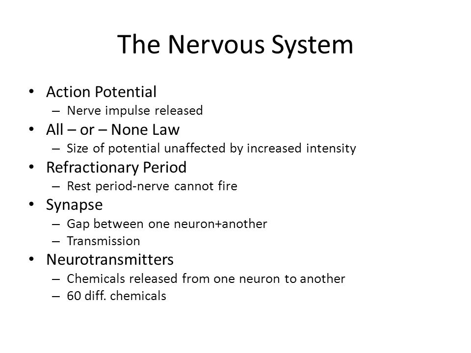 The Nervous System Action Potential – Nerve impulse released All – or – None Law – Size of potential unaffected by increased intensity Refractionary Period – Rest period-nerve cannot fire Synapse – Gap between one neuron+another – Transmission Neurotransmitters – Chemicals released from one neuron to another – 60 diff.