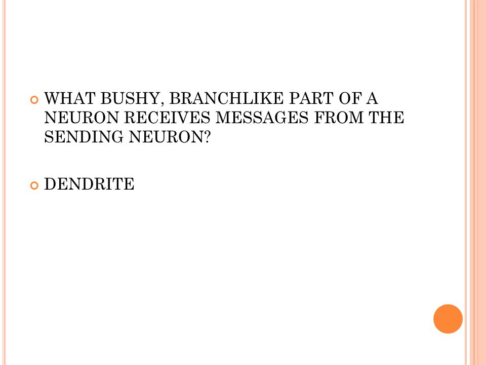 WHAT BUSHY, BRANCHLIKE PART OF A NEURON RECEIVES MESSAGES FROM THE SENDING NEURON DENDRITE