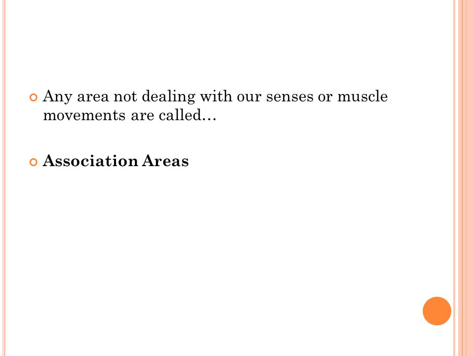 Any area not dealing with our senses or muscle movements are called… Association Areas