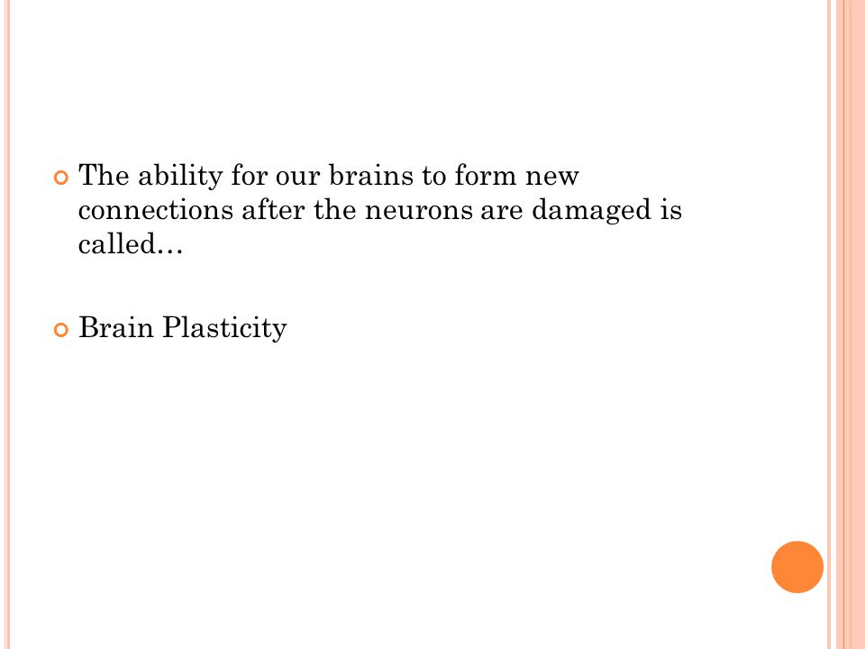 The ability for our brains to form new connections after the neurons are damaged is called… Brain Plasticity