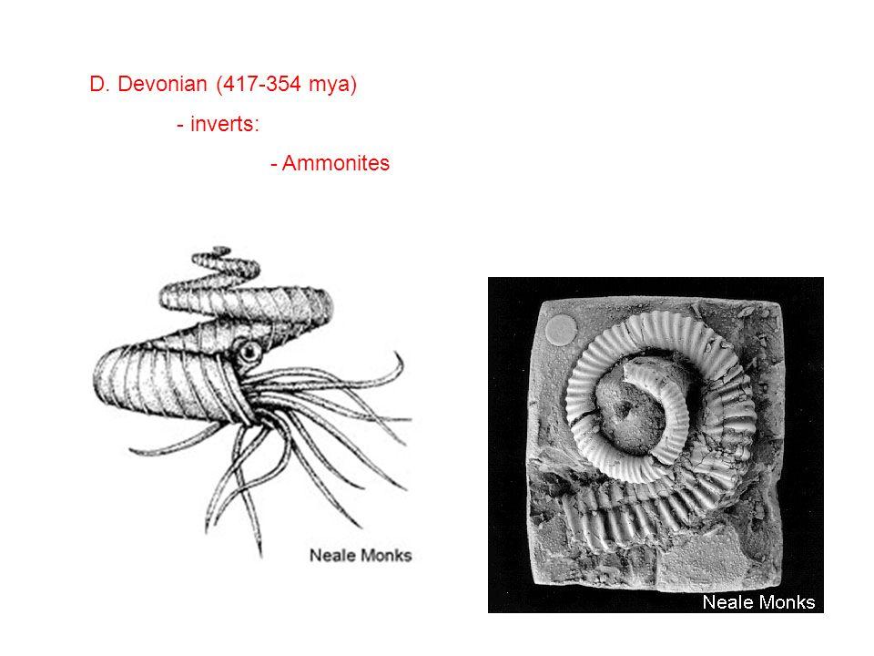 D. Devonian (417-354 mya) - inverts: - Ammonites