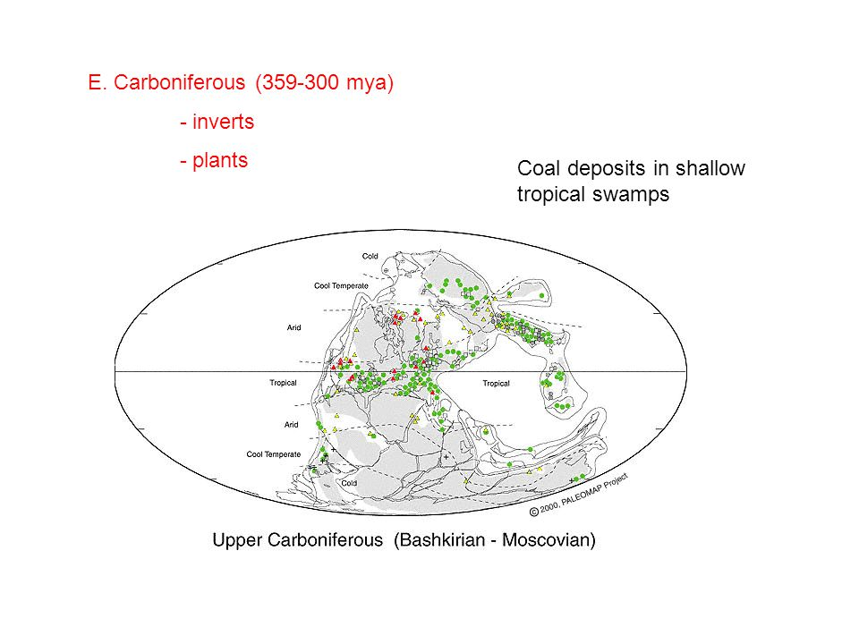 E. Carboniferous (359-300 mya) - inverts - plants Coal deposits in shallow tropical swamps