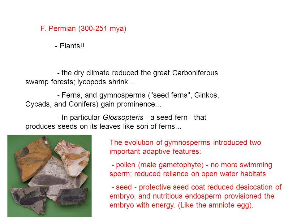 F.Permian (300-251 mya) - Plants!.