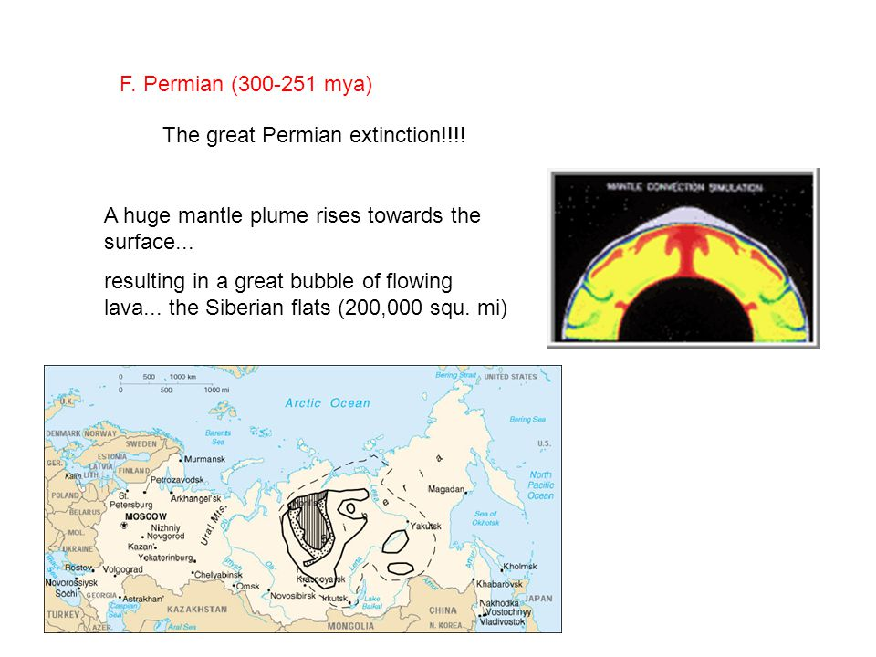 F. Permian (300-251 mya) The great Permian extinction!!!.