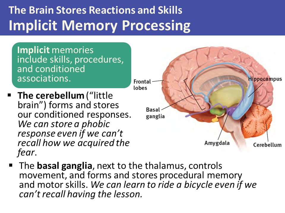 The Brain Stores Reactions and Skills Implicit Memory Processing Implicit memories include skills, procedures, and conditioned associations.