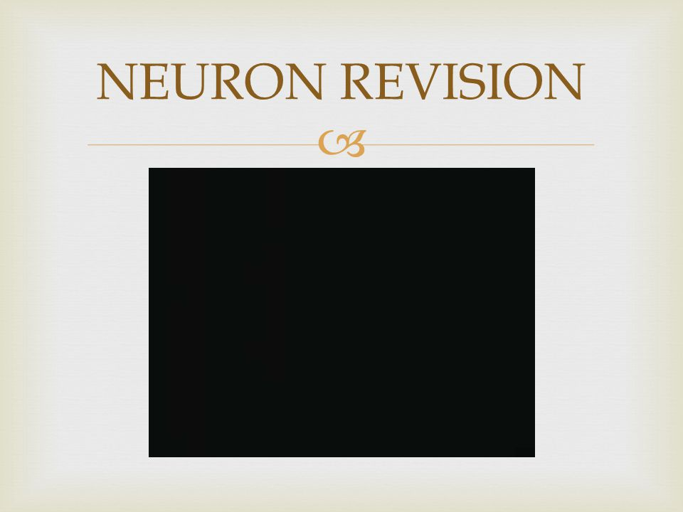  NEURON REVISION