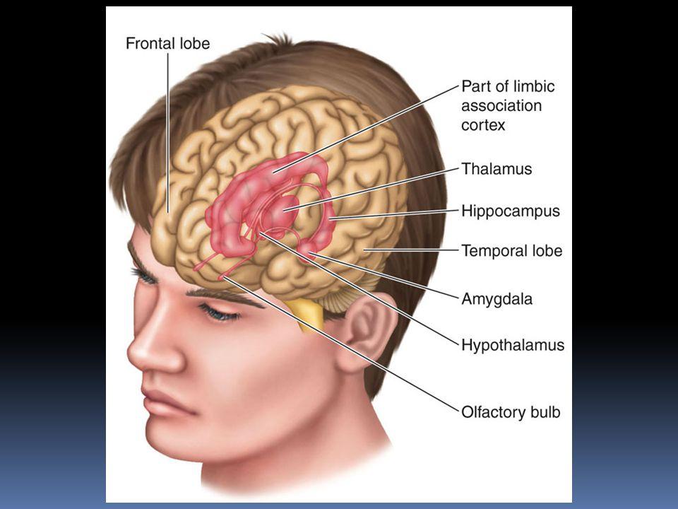 Emotional Behavior  Cerebral cortex plays major role in directing many motor responses during emotional behavior e.g.
