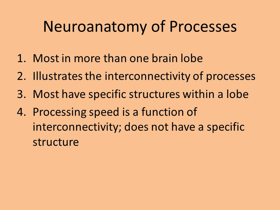 1.Most in more than one brain lobe 2.Illustrates the interconnectivity of processes 3.Most have specific structures within a lobe 4.Processing speed i