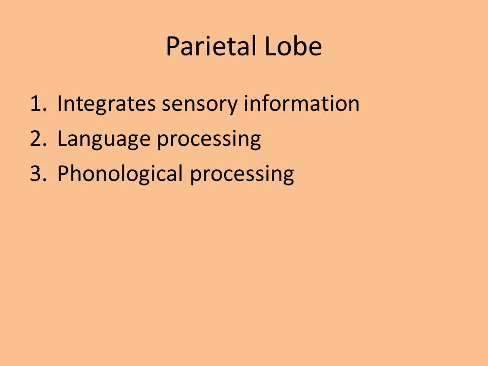 Parietal Lobe 1.Integrates sensory information 2.Language processing 3.Phonological processing