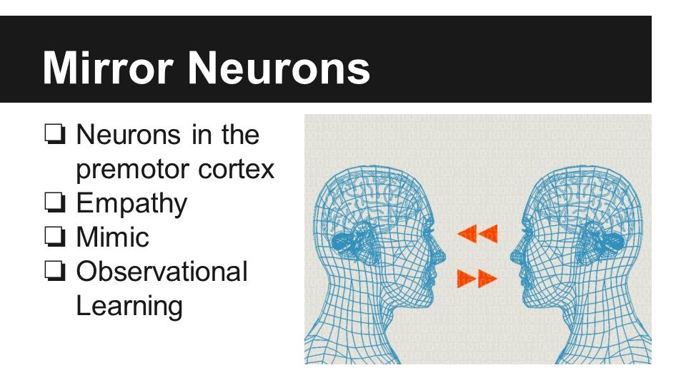 Mirror Neurons ❏ Neurons in the premotor cortex ❏ Empathy ❏ Mimic ❏ Observational Learning