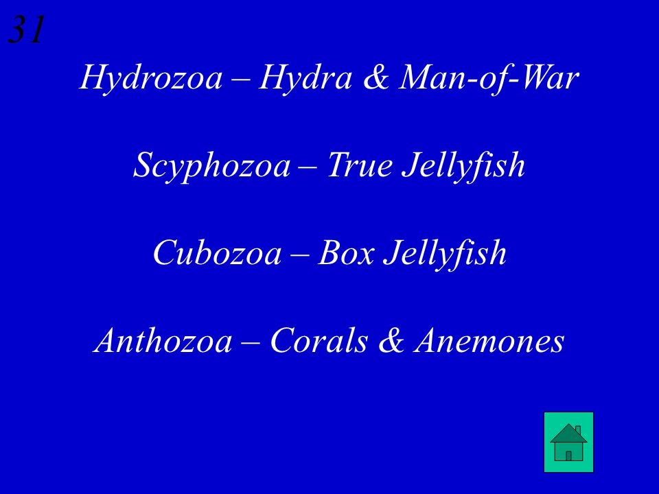 30 What are the four Classes of Phylum Cnidaria and what types of Cnidarians reside in each Class