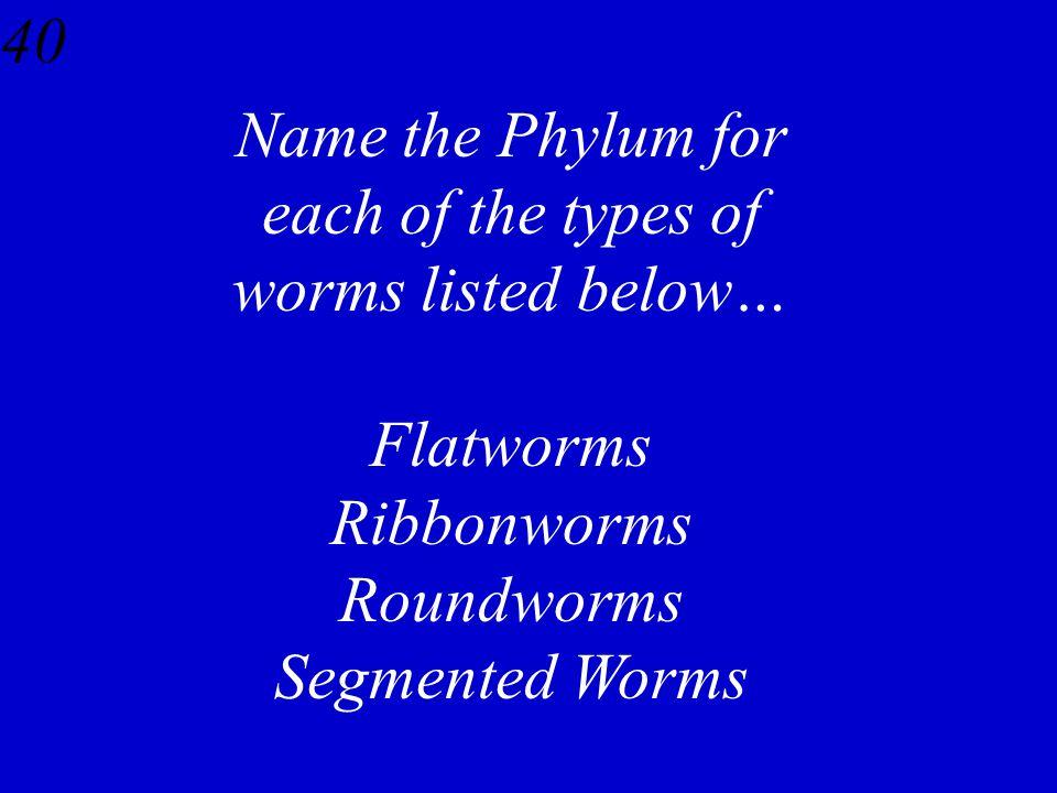 39 Flukes – Trematoda Tapeworms – Cestoidea Planaria – Turbellaria