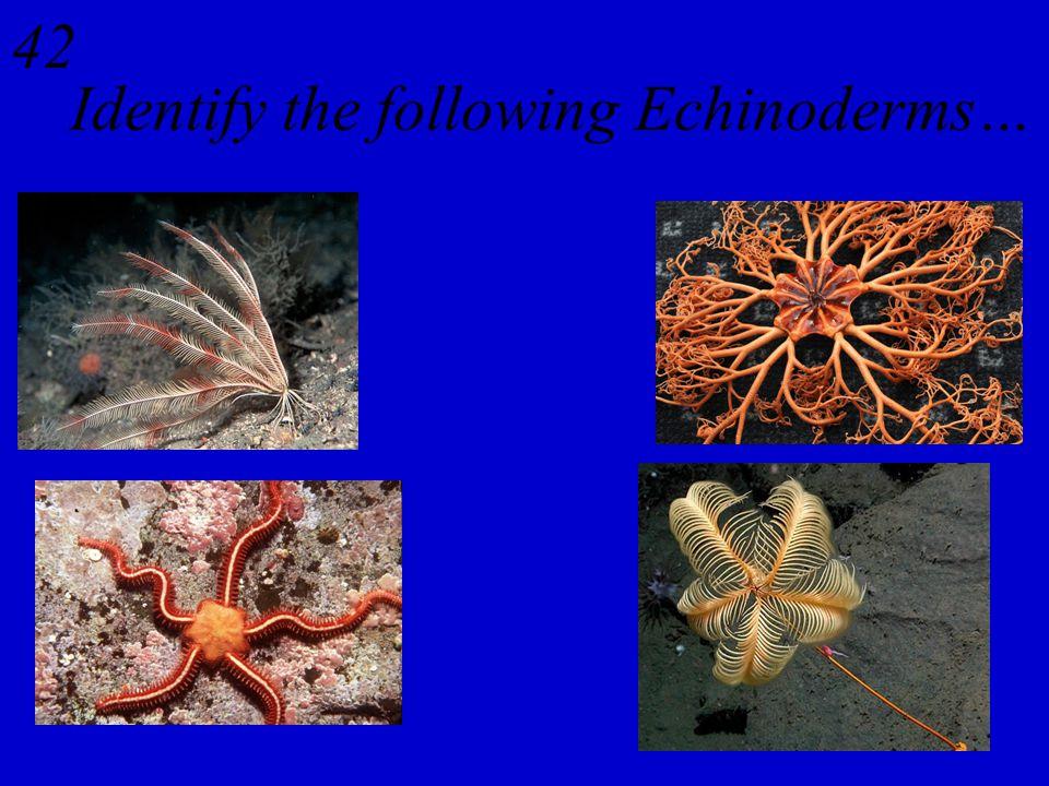 41 Flatworms - Platyhelminthes Ribbonworms - Nemertea Roundworms - Nematoda Segmented Worms - Annelida