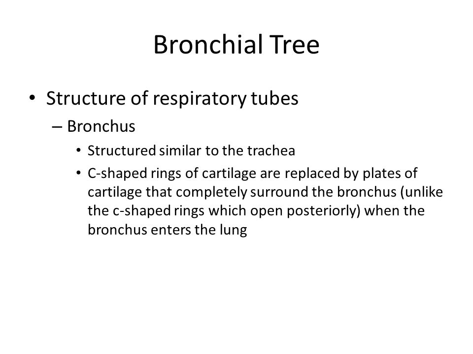 Bronchial Tree Structure of respiratory tubes – Bronchus Structured similar to the trachea C-shaped rings of cartilage are replaced by plates of carti