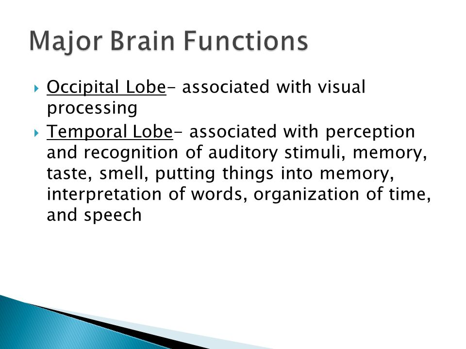  Occipital Lobe- associated with visual processing  Temporal Lobe- associated with perception and recognition of auditory stimuli, memory, taste, smell, putting things into memory, interpretation of words, organization of time, and speech