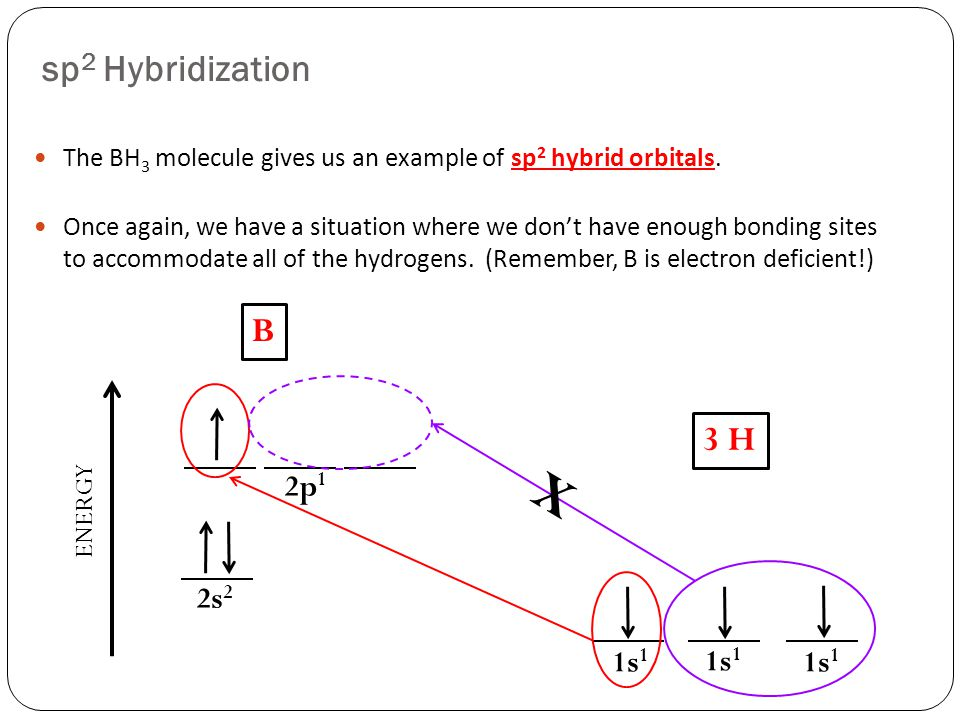 sp 2 Hybridization The BH 3 molecule gives us an example of sp 2 hybrid orbitals.