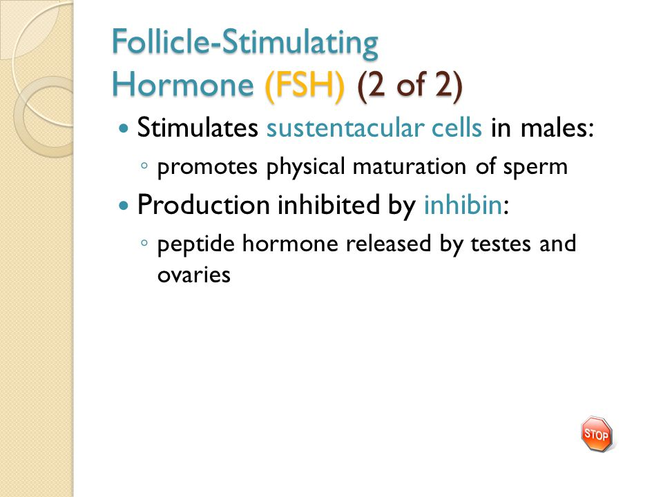 Follicle-Stimulating Hormone (FSH) (2 of 2) Stimulates sustentacular cells in males: ◦ promotes physical maturation of sperm Production inhibited by inhibin: ◦ peptide hormone released by testes and ovaries