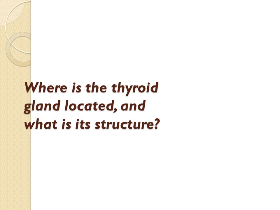 Where is the thyroid gland located, and what is its structure?