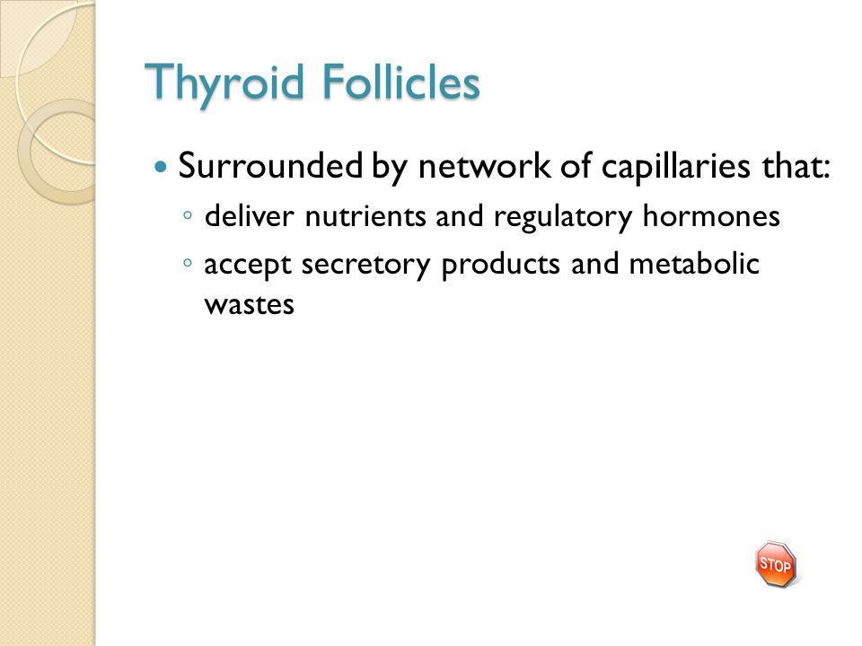 Thyroid Follicles Surrounded by network of capillaries that: ◦ deliver nutrients and regulatory hormones ◦ accept secretory products and metabolic was