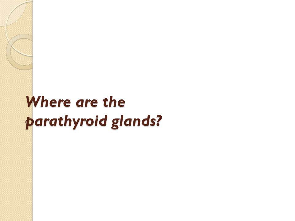 Where are the parathyroid glands?