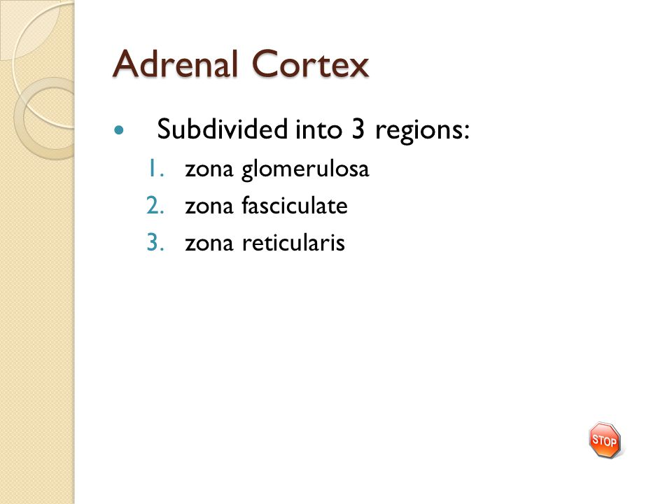 Adrenal Cortex Subdivided into 3 regions: 1.zona glomerulosa 2.zona fasciculate 3.zona reticularis