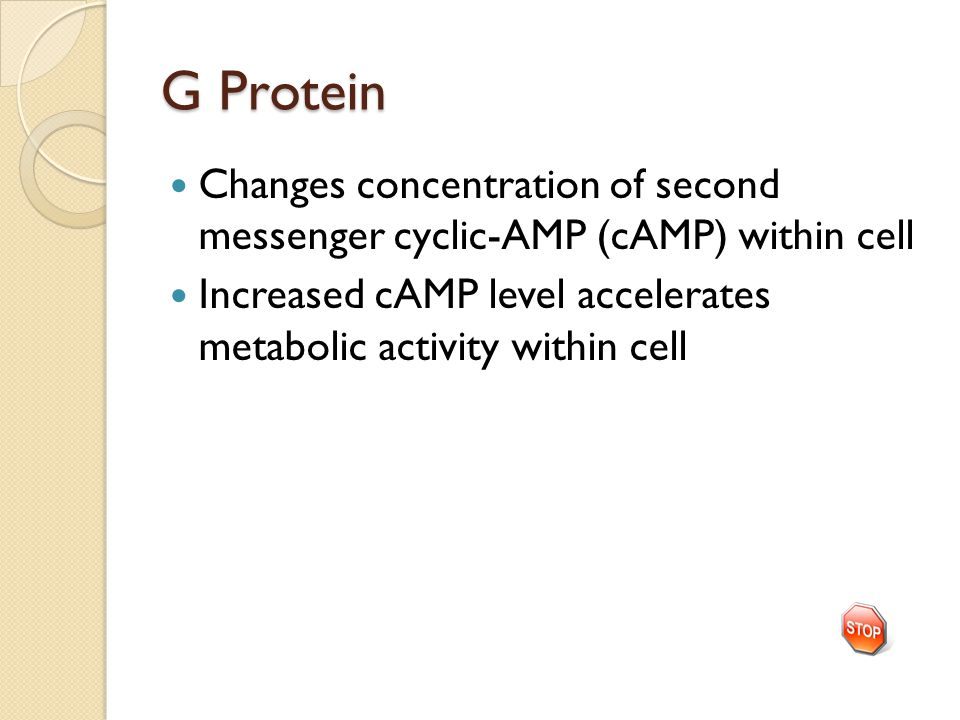 G Protein Changes concentration of second messenger cyclic-AMP (cAMP) within cell Increased cAMP level accelerates metabolic activity within cell