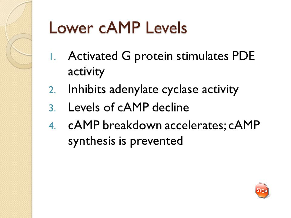 Lower cAMP Levels 1.Activated G protein stimulates PDE activity 2.