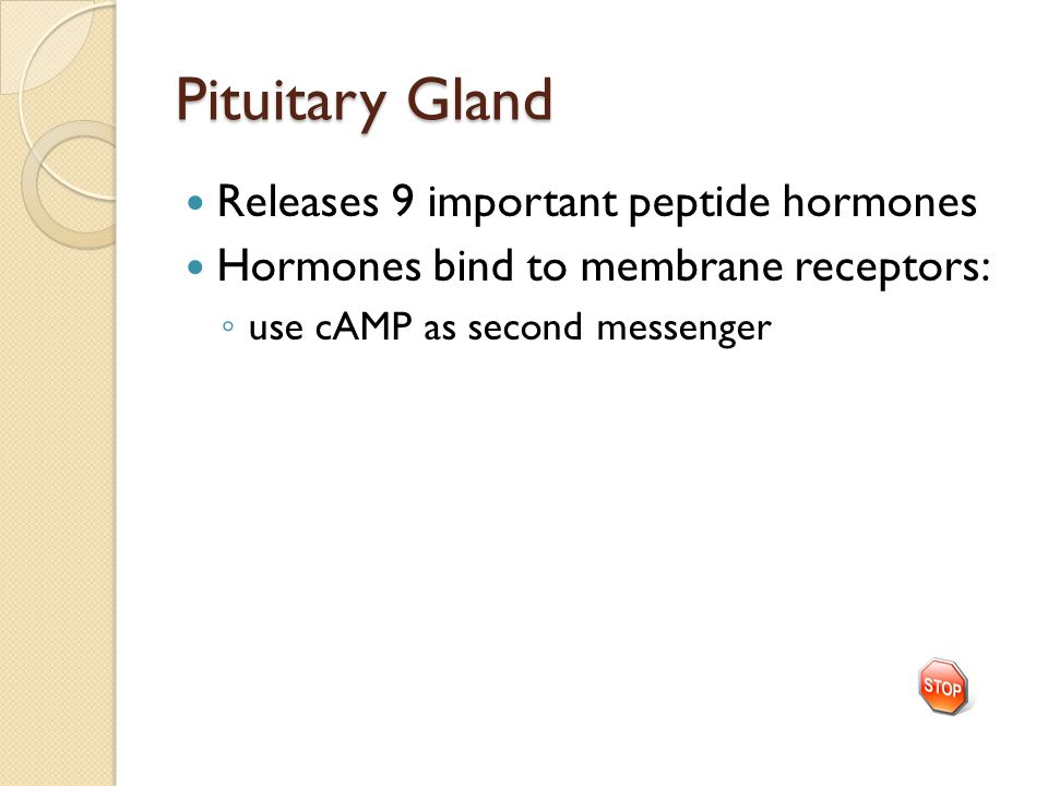 Pituitary Gland Releases 9 important peptide hormones Hormones bind to membrane receptors: ◦ use cAMP as second messenger