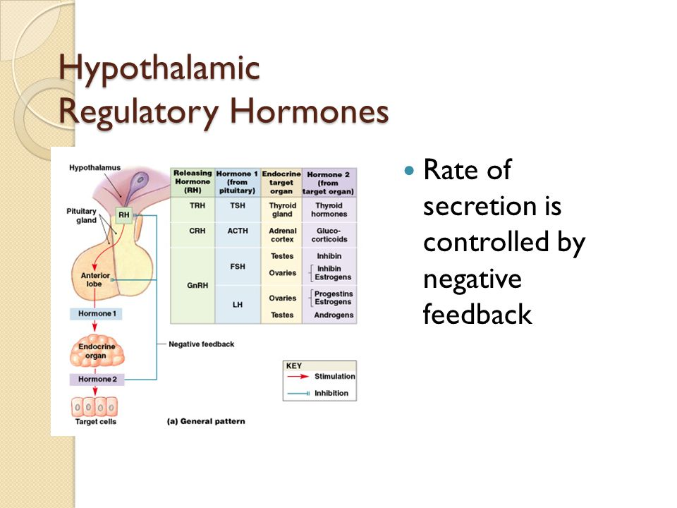 Figure 18–8a Hypothalamic Regulatory Hormones Rate of secretion is controlled by negative feedback