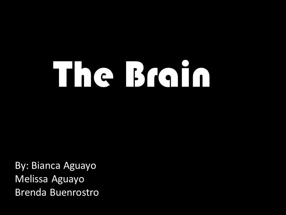 The Brain By: Bianca Aguayo Melissa Aguayo Brenda Buenrostro