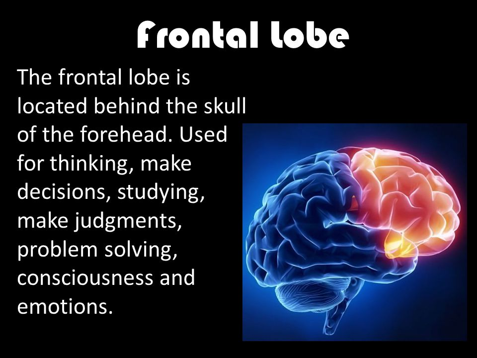 Frontal Lobe The frontal lobe is located behind the skull of the forehead.