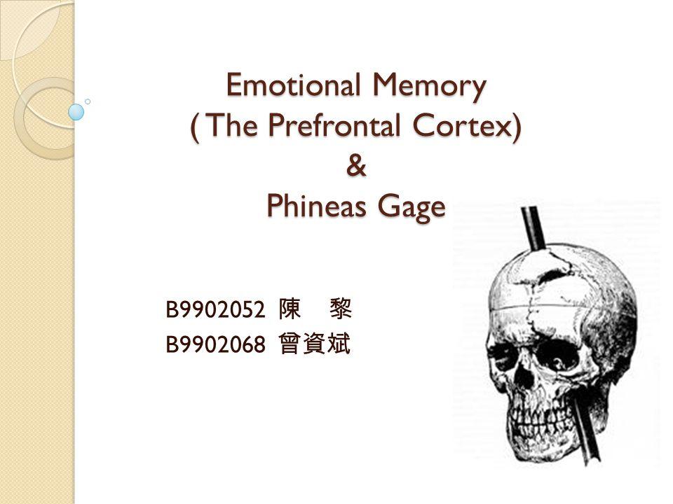 Emotional Memory ( The Prefrontal Cortex) & Phineas Gage B9902052 陳 黎 B9902068 曾資斌
