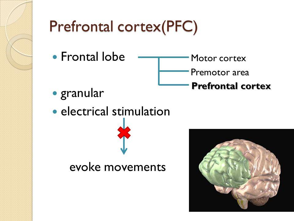 Prefrontal cortex(PFC) Frontal lobe granular electrical stimulation evoke movements Motor cortex Premotor area Prefrontal cortex