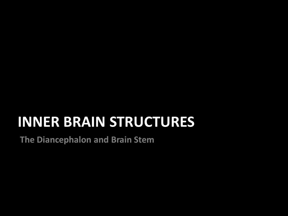 INNER BRAIN STRUCTURES The Diancephalon and Brain Stem