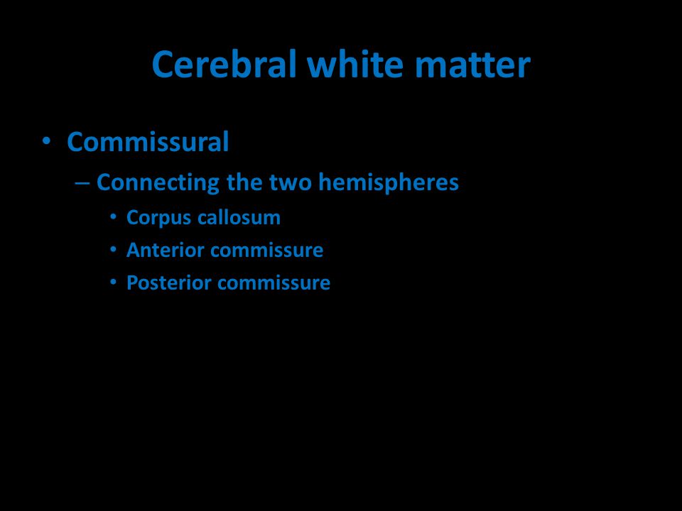 Cerebral white matter Commissural – Connecting the two hemispheres Corpus callosum Anterior commissure Posterior commissure