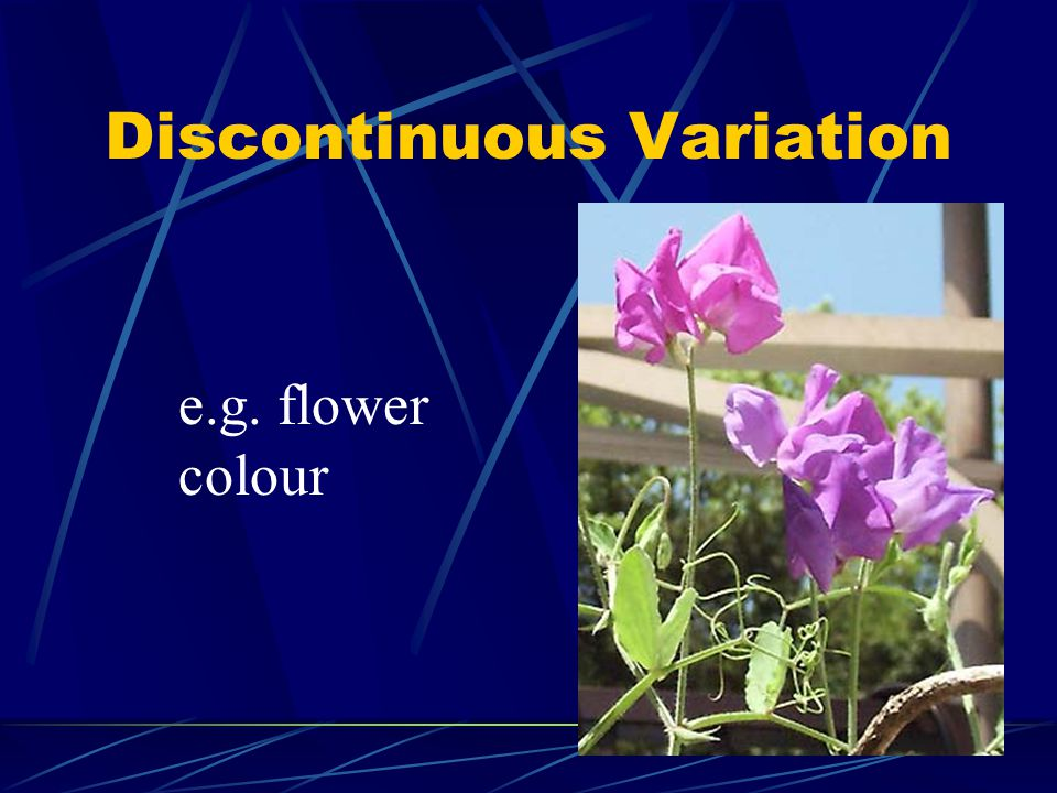 Discontinuous Variation e.g. flower colour